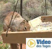 Vaseline stoppt dieses diebische Eichhörnchen