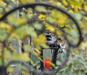 Naturbestattungen in Wien liegen im Trend