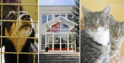 Tag der offenen Tür im Wiener Tierschutzhaus am Sonntag