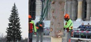 """""""Baum fällt!"""" – Christbaum 2015 am Wiener Rathausplatz gefällt"""
