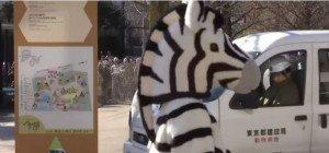 Zebra-Notfall-Übung