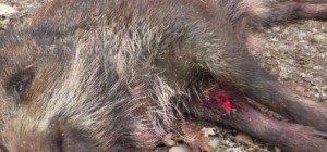 Verein gegen Tierfabriken mit Gutachten gegen Gatterjagden