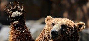 Grizzlybär tötete Radfahrer in den USA