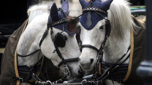 Neuregelung: Fiaker-Pferde bekommen bei 35 Grad hitzefrei