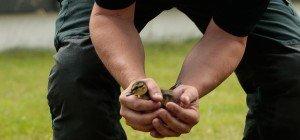 Anwohnerin im Sonnwendviertel und Feuerwehr retten Entenküken