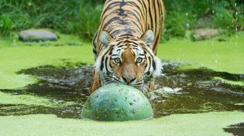 Den Tiergarten Schönbrunn heute kostenlos besuchen: So geht's