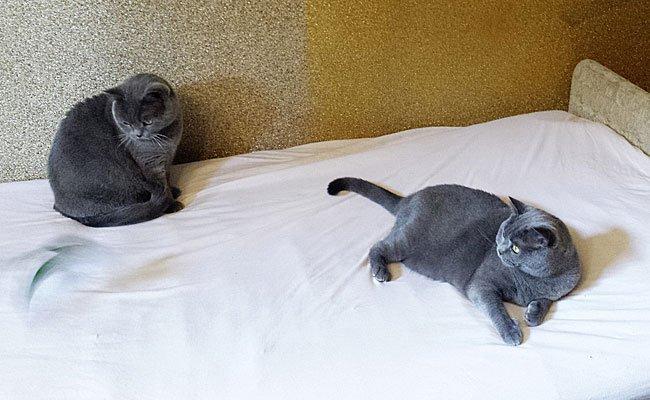 Kater Bärli (l.) und Katze Cilly sind fasziniert von ihrem neuen Spielzeug