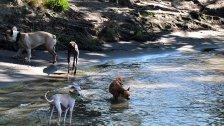 Beste Badeplätze für Hunde in Wien