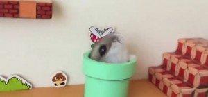 Ein Hamster spielt Super Mario