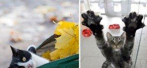 Verlässliche Hilfe gegen Traurigkeit: Die zehn lustigsten Katzenvideos im Internet