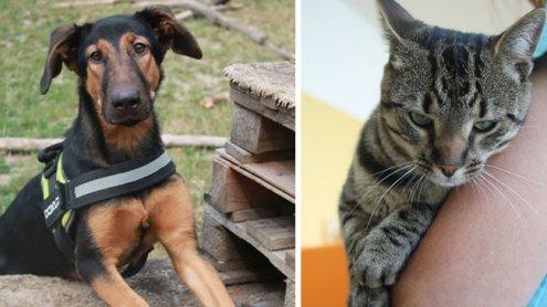 Tierfreunde aufgepasst: Tag der offenen Tür im Tierschutzhaus