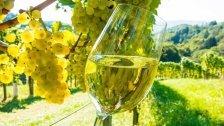 """""""Junger Wiener 2016"""": Weinverkostung in Wien"""