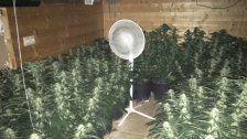 500 Cannabispflanzen bei Feuer in Haus entdeckt
