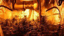 Geruch verriet große Eigengebrauch-Plantage