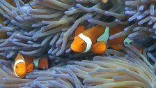 Opfer des Klimawandels: Great Barrier Reef