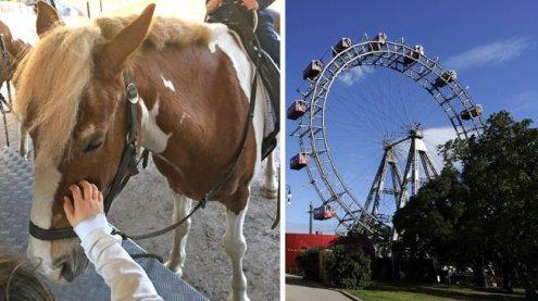Nach Ponykarussell-Aus: Ponys schuften nun in Prater-Reitbahn