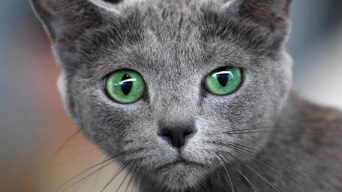Weniger wilde Katzen in Wien