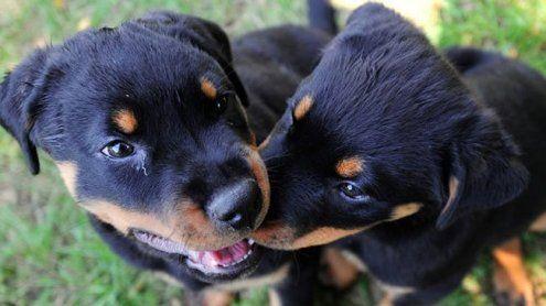 Causa Tierschutzgesetz: VfGH lehnte Prüfung ab - Diskussion