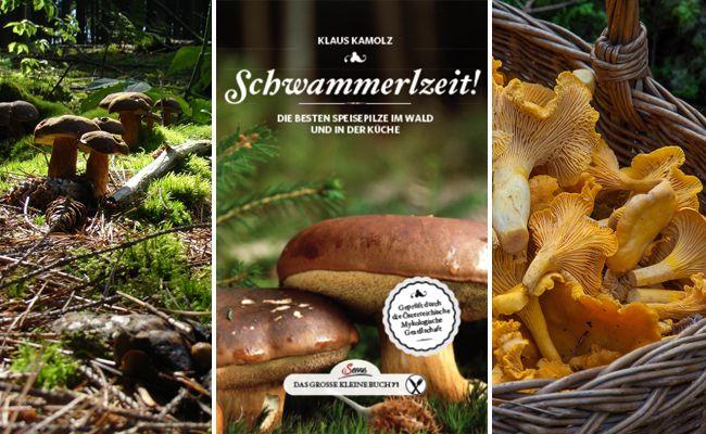Im Buch erfährt man Nützliches zu den heimischen Pilzarten.