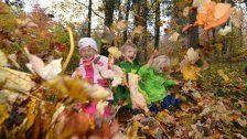 Darum wird das Laub im Herbst bunt