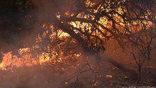 Kalifornien: Feuer fordern über 30 Menschenleben