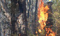 Feuerwehrmann löst aus VersehenBuschfeuer aus