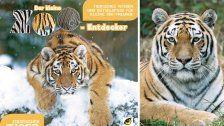 Schönbrunn-Fotograf veröffentlicht Tiger-Buch