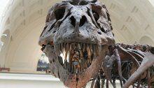 Forscher finden mögliches Dinosaurier-Blut in Zecke