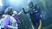 Erneuter Besucherrekord im Haus des Meeres