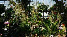 Exoten: Orchideen- und Tillandsienschau in Wien