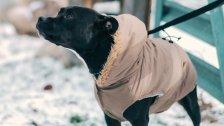Hund bespringt Mann: Auf Fahrbahn gestürzt