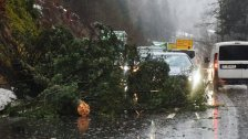 Baum auf Pkw gestürzt: Beifahrerin verstorben