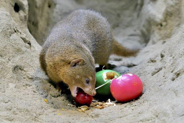 Tierische Eiersuche samt Osterprogramm für Zoobesucher in Schönbrunn