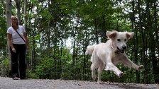 Hunde sollen zum Schutz der Wildtiere an die Leine